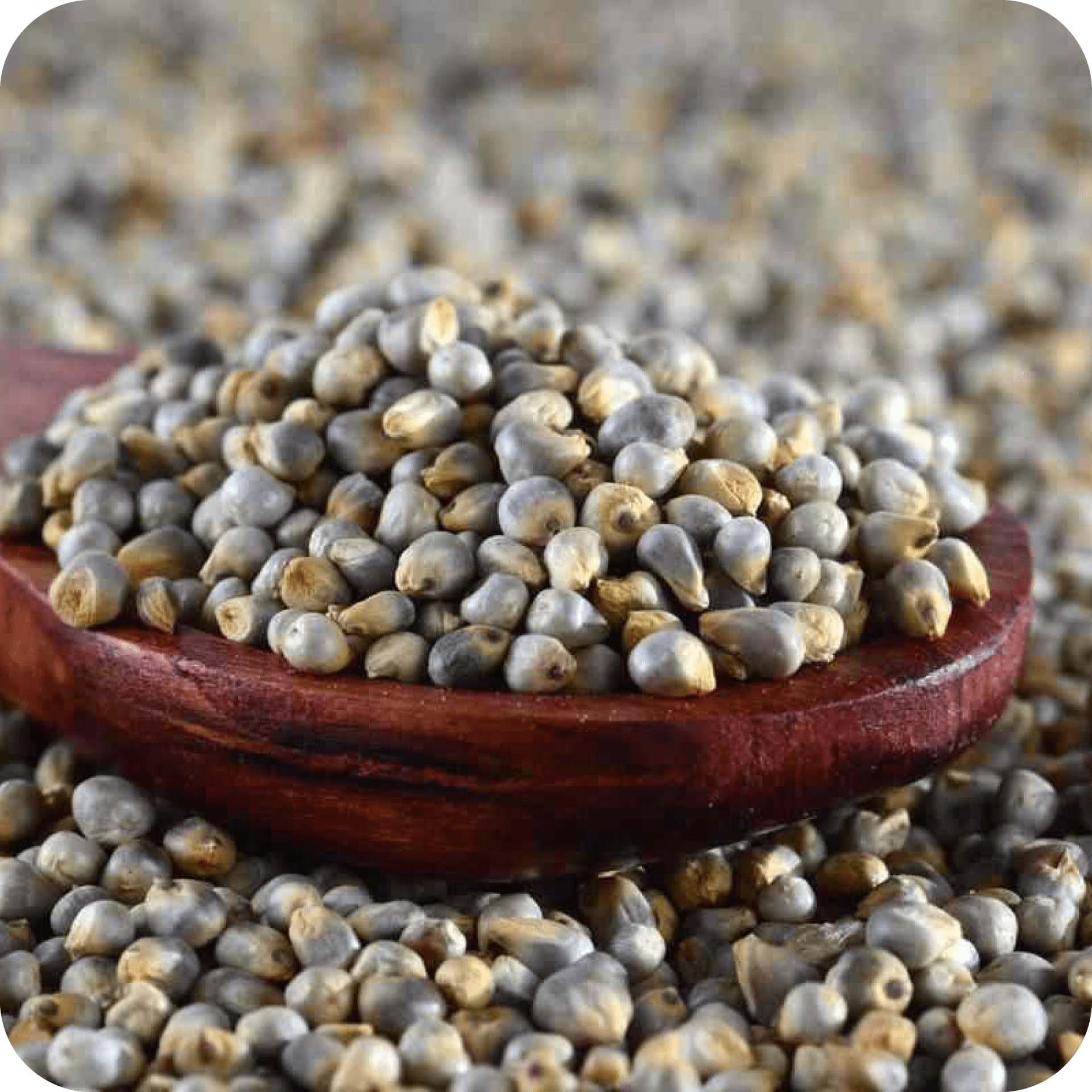 healthy bajra millet